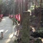 幸田町の不動ヶ滝園地でキャンプしてきた!